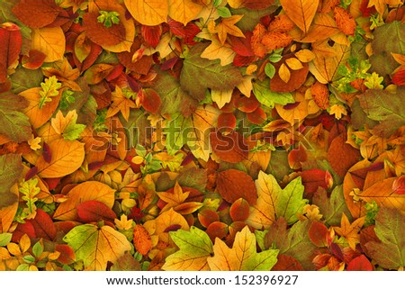 Autumn leaves as background - stock photo