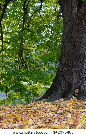 Autumn Leaves at the Base of a Tree - stock photo