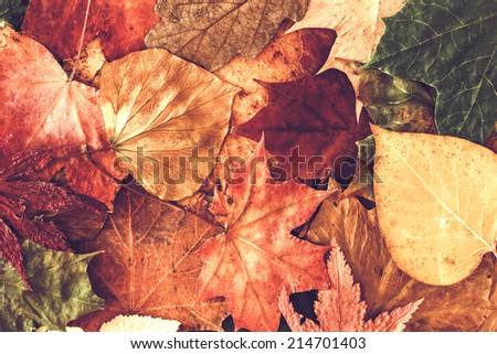Autumn leaves background. / Autumn leaves background.  - stock photo