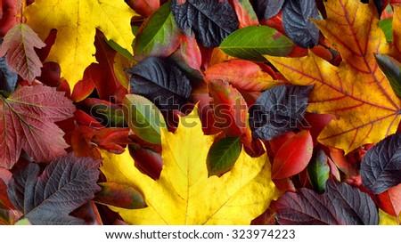 autumn leaves background. Header for website - stock photo
