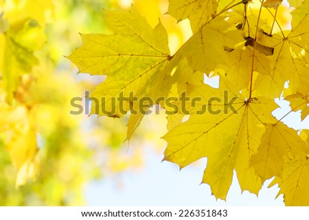 Autumn leaves background, very shallow focus. Park outdoor photography. - stock photo