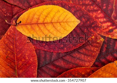 Autumn Leaves. Beautiful photos of autumn. The colors of autumn leaves - stock photo