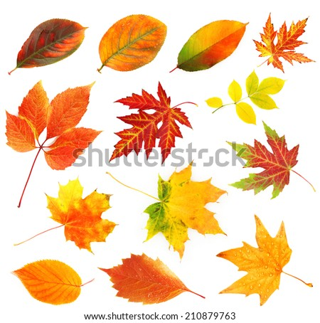 Autumn leaves collage isolated on white - stock photo