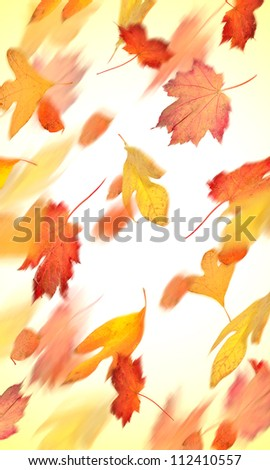 Autumn leaves falling in motion - stock photo