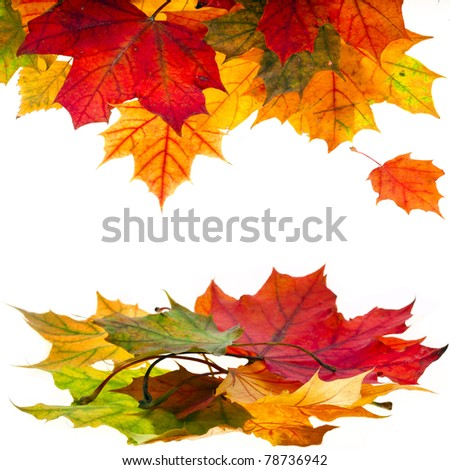 Autumn leaves falling isolated on white - stock photo