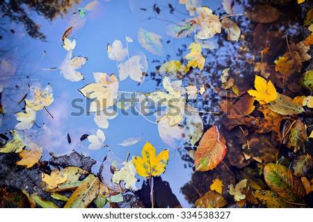 Autumn leaves in a rain puddle - stock photo