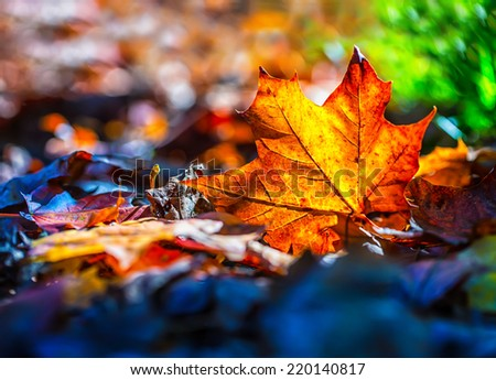 Autumn leaves in autumn colours and lights - stock photo