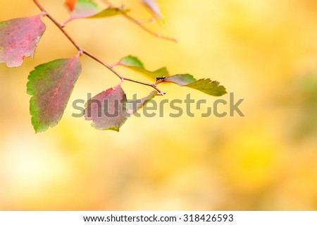 Autumn leaves in blurred background. - stock photo
