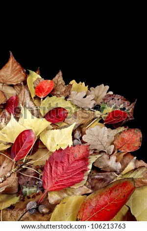 Autumn leaves isolated on a black background . - stock photo