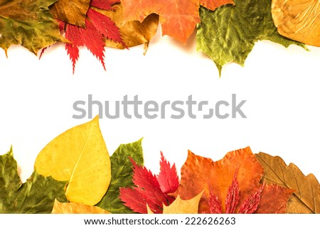 Autumn leaves isolated on white/ Autumn leaves isolated on white - stock photo