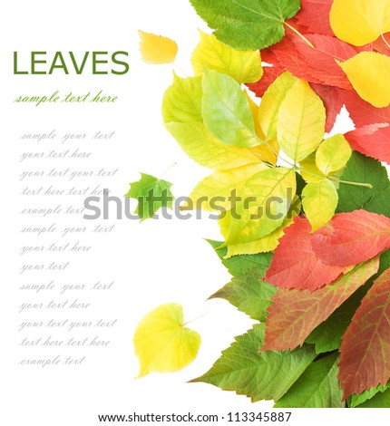 Autumn leaves isolated on white background with sample text - stock photo