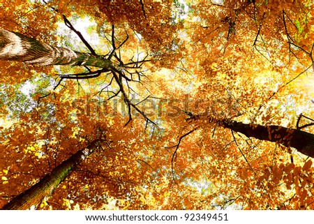 Autumn Leaves Natural Background - stock photo