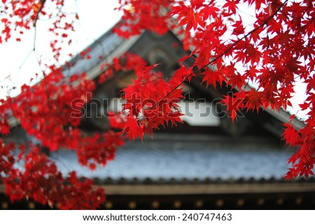 autumn leaves near japan temple change the color in the japan park view in Kyoto - stock photo