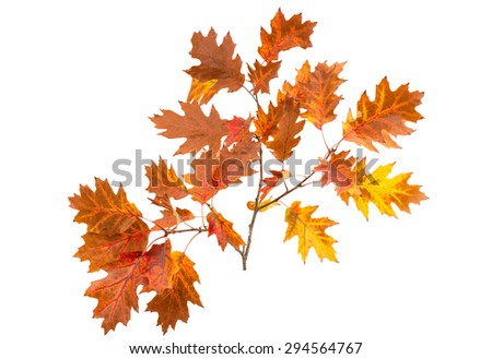 autumn leaves on a white background - stock photo