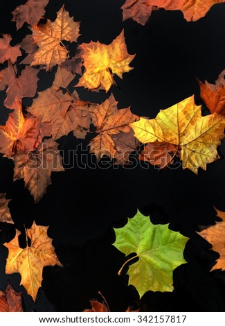 Autumn leaves on black background - stock photo