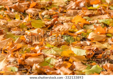 Autumn leaves on the ground in high resolution - stock photo
