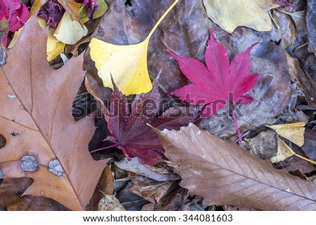 Autumn leaves on the ground in the forest - stock photo