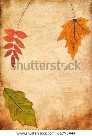 Autumn Leaves on the Old Paper - stock photo