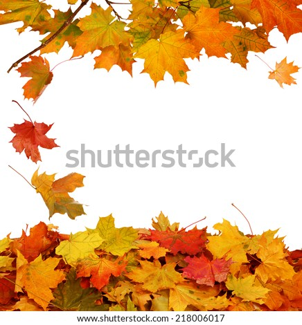 Autumn  leaves on white background - stock photo