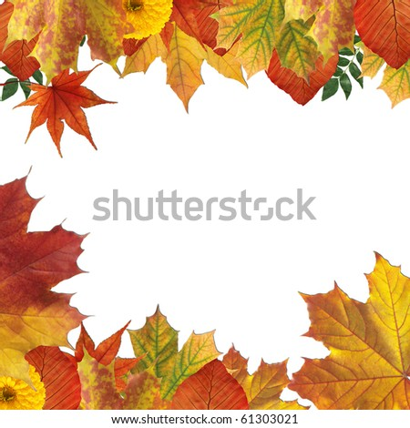 Autumn leaves on white background on border of photo - stock photo