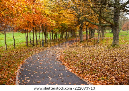 autumn leaves park footpath   - stock photo
