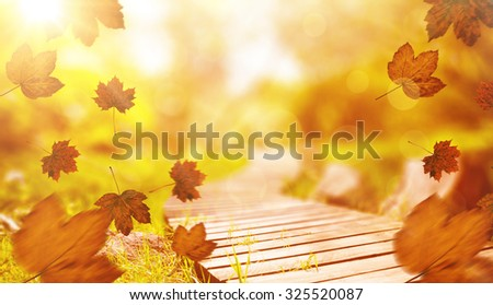 Autumn leaves pattern against wooden trail across countryside - stock photo
