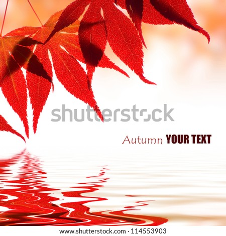 Autumn leaves reflected in water - stock photo