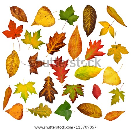 Autumn leaves set.  Isolated on white - stock photo