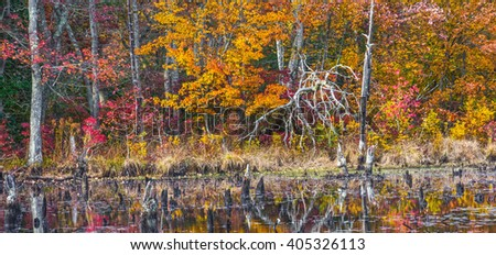 Autumn leaves surround this pond with dead trees in Allaire State Park in New Jersey. - stock photo