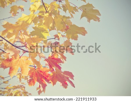 Autumn leaves with retro filter effect - stock photo