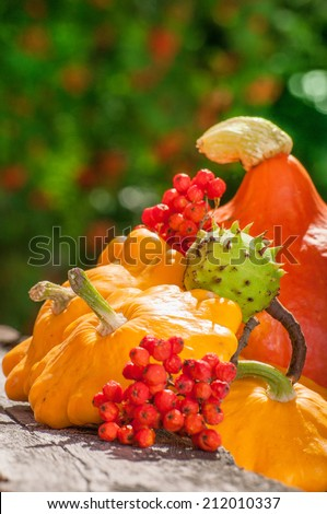 Autumn leaves with season vegetable, pumpkin, ashberry and chestnut on wooden table - stock photo