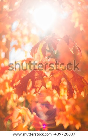 autumn leaves with sun flare - stock photo