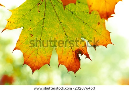 autumn leaves yellow, green and red outdoors in a forest with dew drops - stock photo