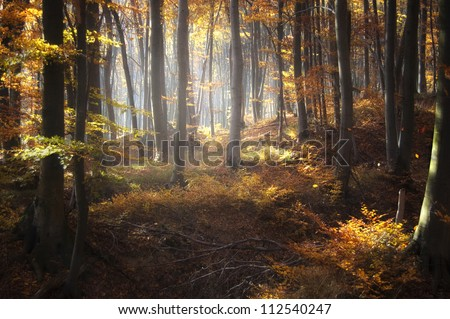 autumn light in forest - stock photo