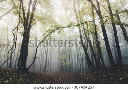autumn light in misty forest - stock photo
