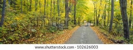 Autumn, Macedonia Brook State Park, Connecticut - stock photo