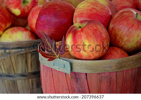 autumn maple leaf in a basket of apples - stock photo
