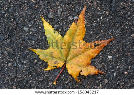 Autumn maple leaf on asphalt - stock photo