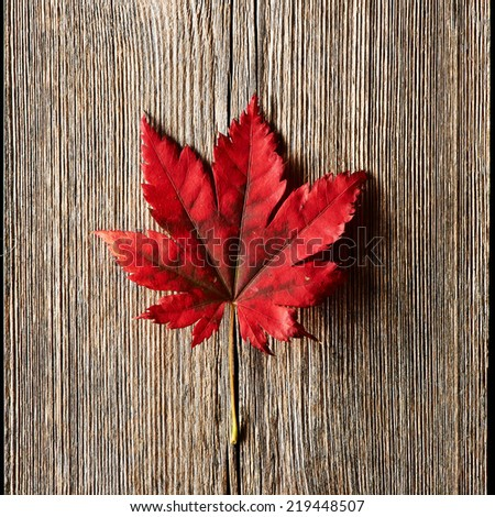 Autumn maple leaf over old wooden background with copy space - stock photo