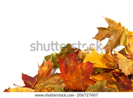 Autumn maple leafs at corner. Autumn background with copy space.  - stock photo
