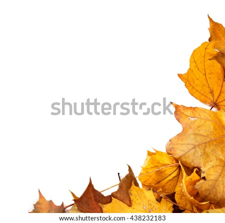 Autumn maple leafs background with copy space - stock photo