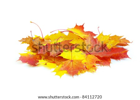 autumn maple leafs isolated on a white - stock photo