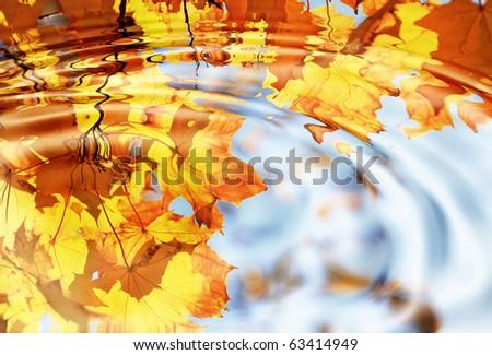 autumn maple leaves against the blue sky - stock photo