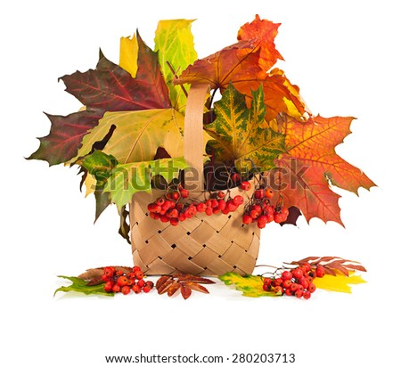 autumn maple leaves and rowan berries in a basket on a white background - stock photo