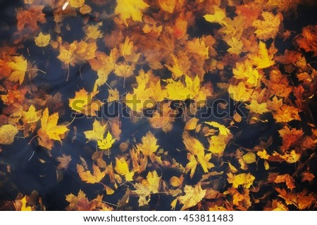 Autumn maple leaves on the water - stock photo