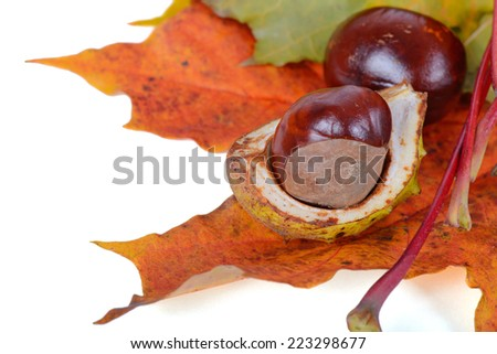 Autumn maple leaves with chestnuts - stock photo