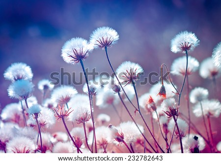 Autumn meadow flowers during sunset. Shallow depth of field  - stock photo