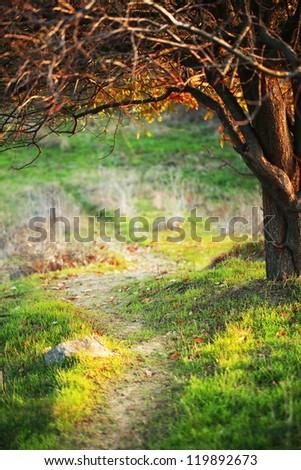 Autumn meadow with big tree - stock photo