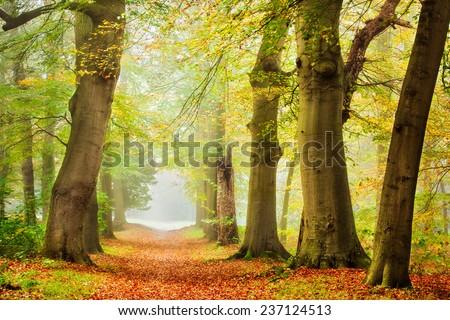 Autumn Melody   Beautiful autumn scene in a foggy day . - stock photo