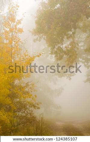 Autumn mist - stock photo